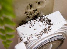 rid-of-sugar-ants